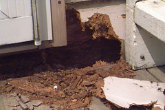 Pest Damage Repair in Minneapolis