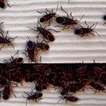 Pest Removal MN
