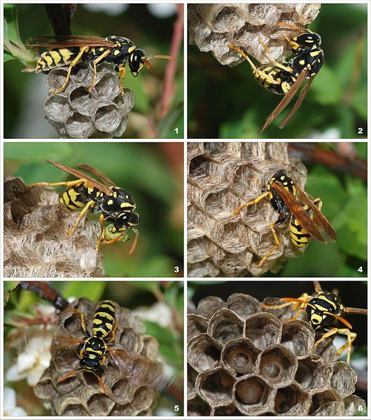 Wasp Exterminator St Paul MN