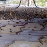 MN Wasp Bee Hornet Exterminator