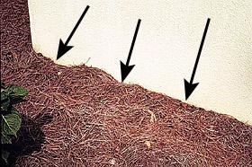 Carpenter Ant Pest Extermination In Minnesota Part 1