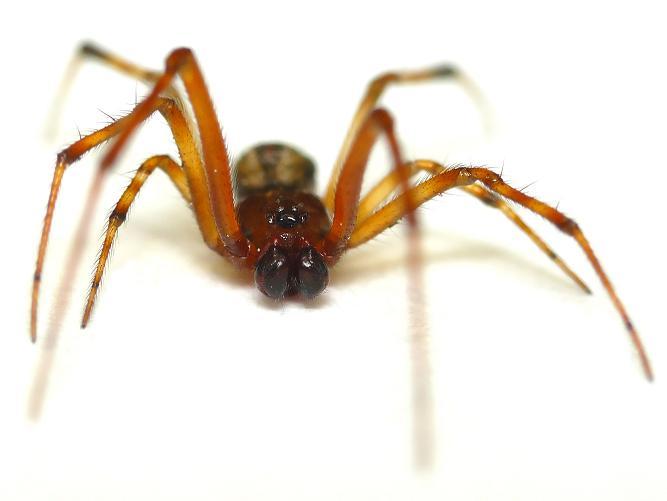Roseville Spider Removal