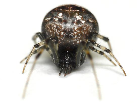 Pest Control Company Minneapolis
