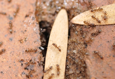 Ant Infestation Control MN