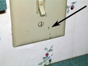 Ants seen trailing from behind an electrical switch or outlet cover may mean that you have a colony living in a wall void