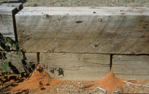 Carpenter Ant Extermination Options