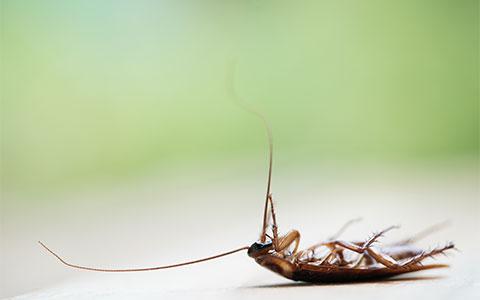 Commercial Pest Exterminator MN