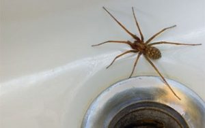 Effective Spider Removal in Twin Cities, MN