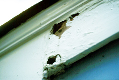 Fascia board damaged by carpenter ants and moisture