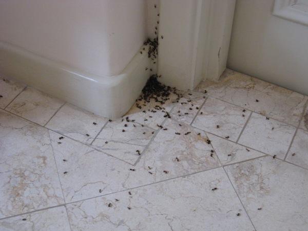MN Pest Exterminator