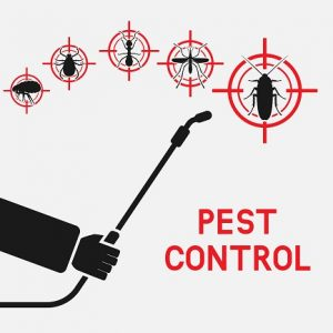 No Contact Insect Spraying in Minneapolis