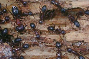 Remove Ants And Keep Them Form Returning