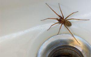 Spider Exterminator St Paul