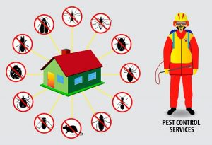 Summer And Fall Extermination Services
