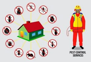 Summer Pest Removal Services