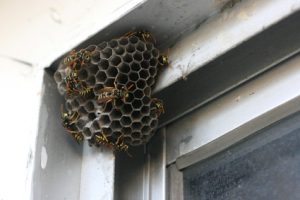 Wasp And Bee Extermination