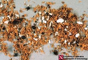 Carpenter Ant Extermination MN