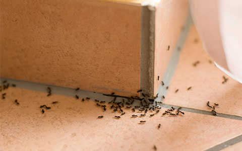 Ant Exterminator Serving Minnesota