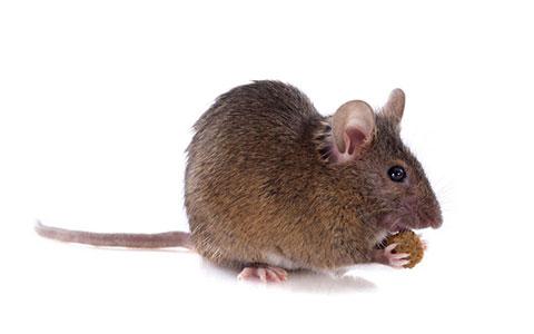 Pest Control Services MN | Minnesota Exterminator
